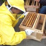 青空養蜂場